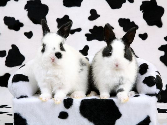 click to free download the wallpaper--Spotted Rabbits Image, Two Close Rabbits, Both on Alert
