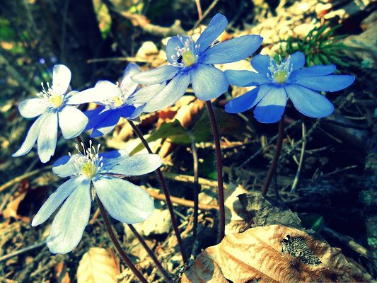 click to free download the wallpaper--Spring Flowers Photo, Blue and Tiny Flowers in Bloom, Sunshine Pouring on