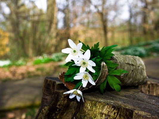click to free download the wallpaper--Spring Flowers Picture, White Little Flowers in Bloom, Great Forest Scene