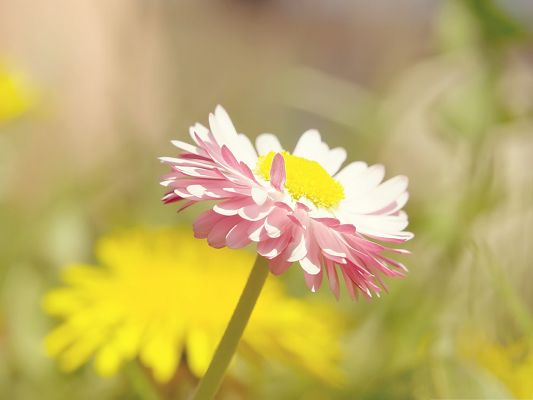 click to free download the wallpaper--Summer Flower Picture, Pink Blooming Flowers Under Macro Focus, Amazing Scenery
