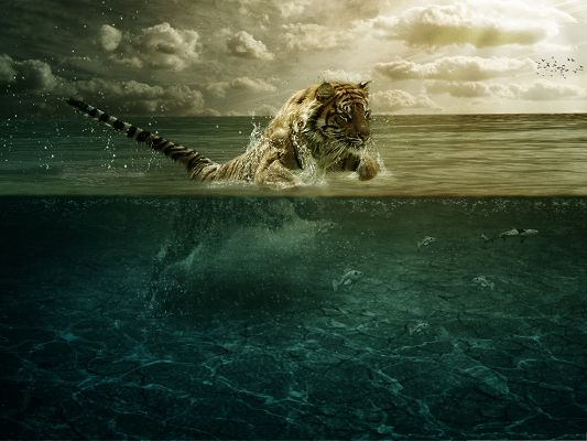 click to free download the wallpaper--Swimming Tiger Pic, Brave Tiger Leaping in Water, What Is It After?