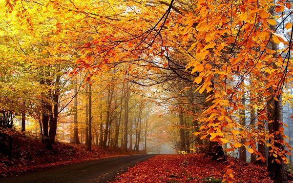 Tall and Prosperous Trees, Leaves Turning Yellow, What an Uncomparable Scene - Autumn Natural Scenery Wallpaper