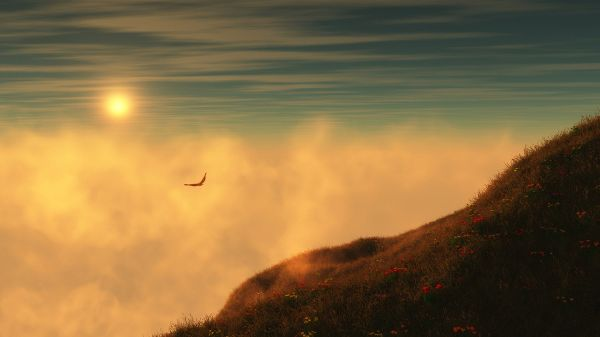 The Rising Sun, Golden and Warm Light is Generated, a Lonely Bird, Hope She Will Catch Up With Her Family and Group - HD Natural Scenery Wallpaper
