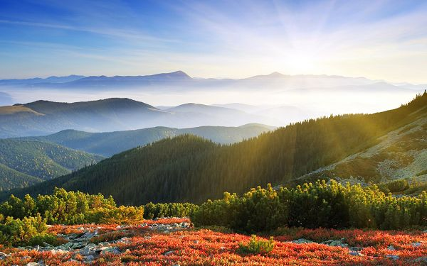 The Rising Sun is Powerful Enough, the Hills and the Flowers Are Stretching the Arms to Welcome the New Day, an Incredible Scene! - HD Natural Scenery Wallpaper