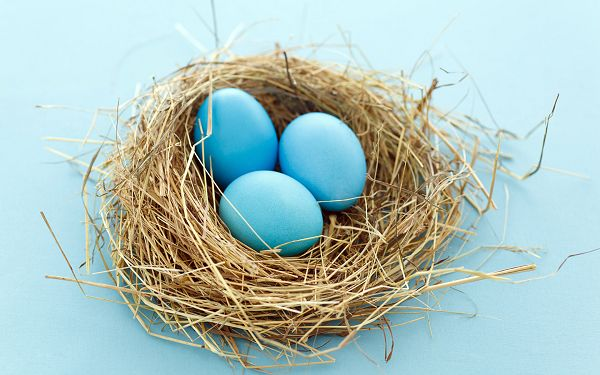 click to free download the wallpaper---Three Blue Eggs and Blue Background, Fitting Each Other Quite Well, an Outstanding Combination - HD Colorful Eggs Wallpaper