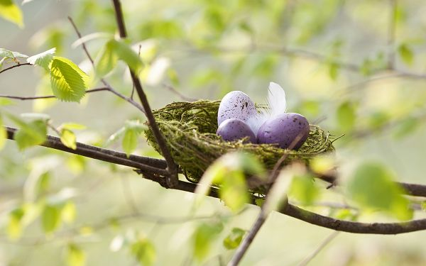 click to free download the wallpaper---Three Colorful Eggs Placed on a Branch of Tree, Mum's Fur is With Them, Can Get Safe and Peaceful Sleep - HD Colorful Eggs Wallpaper