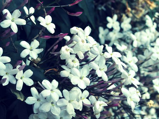 Tiny White Flowers Picture, Blooming Flowers Ready to be Praised