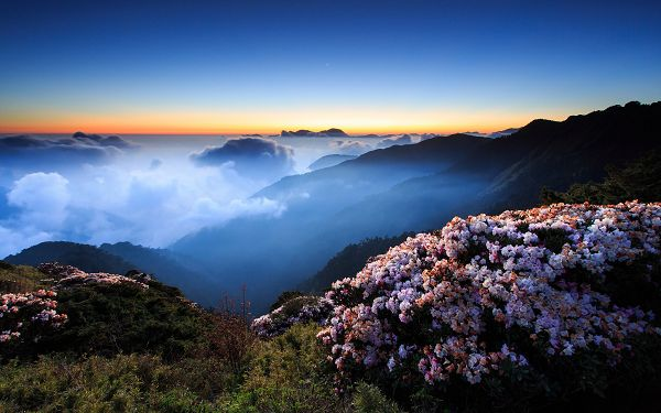 click to free download the wallpaper--Tough and Beautiful Flowers in Full Bloom, Available at a High Altitude, Clouds Are Within Easy Reach - HD Natural Scenery Wallpaper