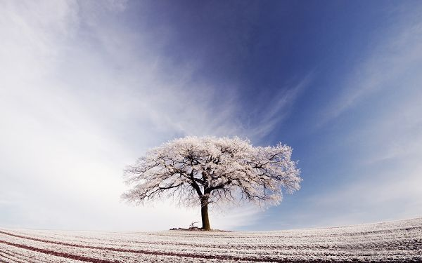 click to free download the wallpaper--Tree Standing Alone in the Snowy World, Its Branches All Covered with Snow, Still It Won't be Long before Spring Comes - HD Snowy Scene Wallpaper