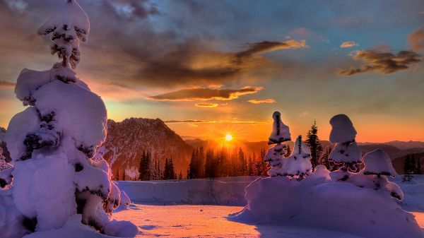 Trees and Hills with Thick Snow, the Rising Sun, Snowy Day Can be Quite Fun - HD Natural Scenery Wallpaper