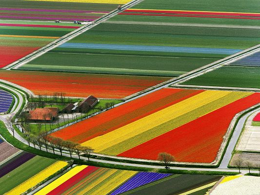 click to free download the wallpaper--Tulip Flower Fields, Colorful Flowers in Aerial View, Great Scenery