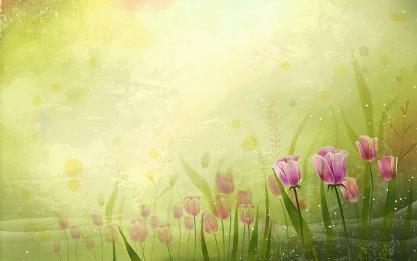 Tulips All over the Picture, Some Transparent, Green Background is Combined, an Incredible Scene - Natural Scenery Wallpaper