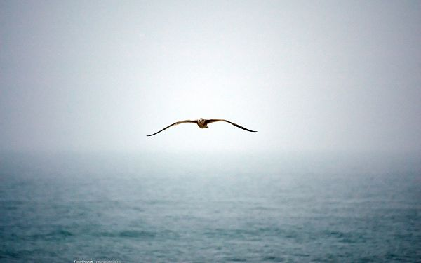 Twisting Sea Water, a Bird is Flying by, Wings Are in Full Stretch, Determination is Revealed - HD Natural Scenery Wallpaper