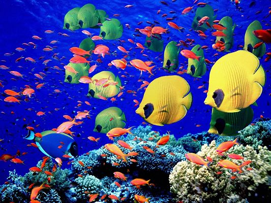 Under the Sea Scenery, Colorful Fishes Swimming Freely, Seaweed All Along