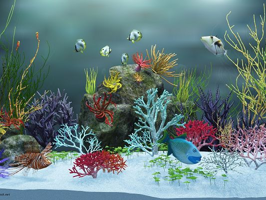 Underwater World Post, Various Fishes Are Swimming, Colorful Sea Plants, a Clean World