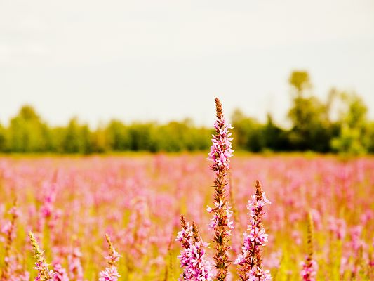 click to free download the wallpaper--Unknown Flower Picture, Little Pink Flowers in Bloom, Great Growth Under the Sun