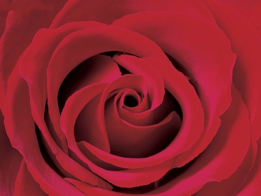 click to free download the wallpaper--Valentine Rose, the Best Gift on Valentine's Day!