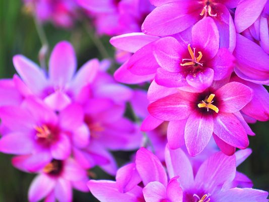 click to free download the wallpaper--Vibrant Flower Images, Purple Flowers in Bloom, Piled Up and Impressive