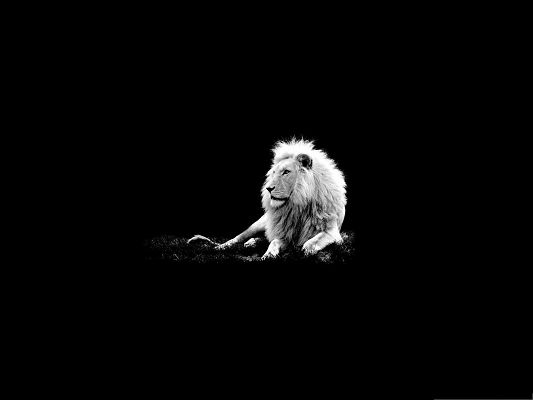 Wallpaper Computer Background, Decent Lion Lying on Grass, Dark Setting
