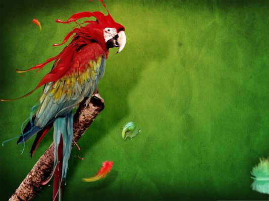 Wallpaper Computer Background, the Beautiful and Clever Parrot