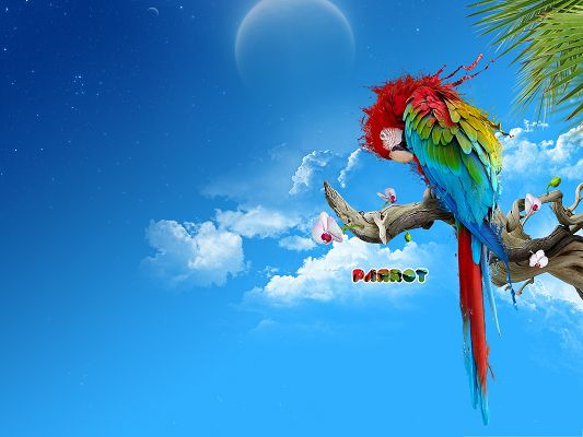click to free download the wallpaper--Wallpaper Free Computer, Beautiful Parrot Standing on Branch, Under the Incredibly Blue Sky