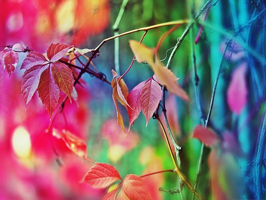 click to free download the wallpaper--Wallpaper Free Computer, Colorful Leaves in Summer, Amazing Nature Landscape