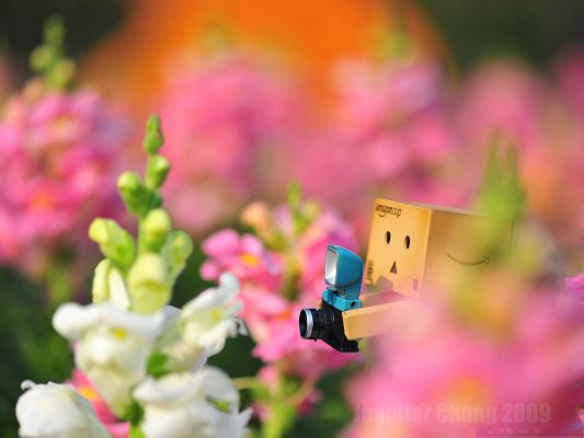 click to free download the wallpaper--Wallpaper Free Computer, Danbo Lost In the Flower Sea, the Scene is Too Beautiful