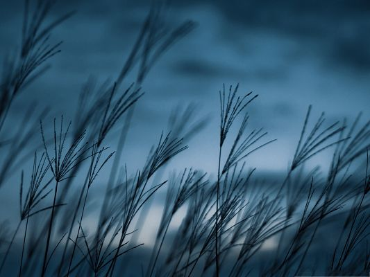 click to free download the wallpaper--Wallpaper Free Computer, Dancing Grass in Dusk Scenery