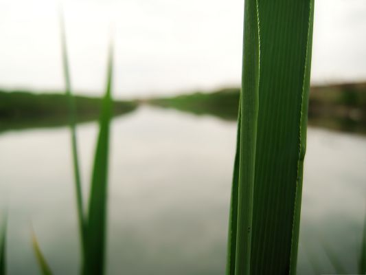 click to free download the wallpaper--Wallpaper Free Computer, Green Reed Under Macro Focus, Facing the Peaceful Sea