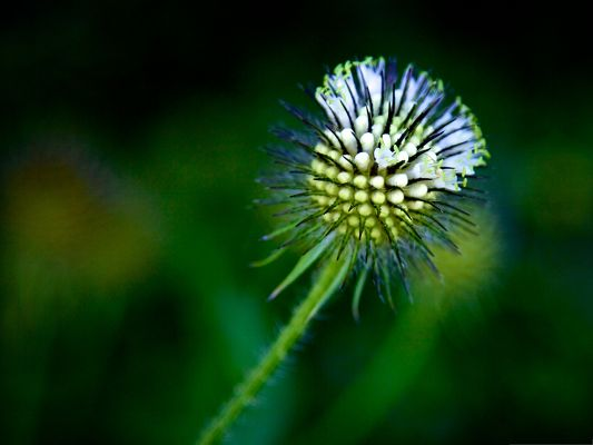 click to free download the wallpaper--Wallpaper Free Computer, Spikey Ball on Green Background, Deeply Impressive