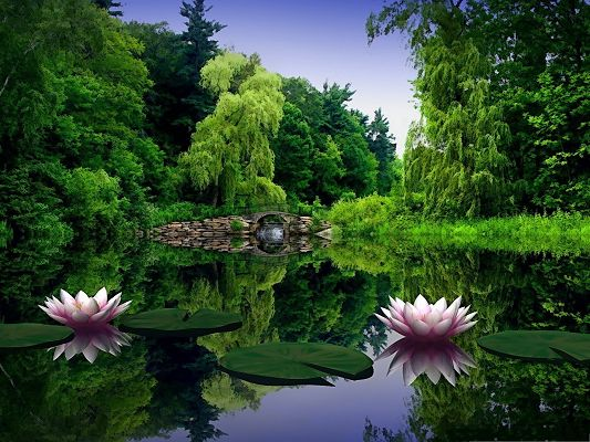 click to free download the wallpaper--Wallpaper Free Computer, Water Lilies on the Clear Peaceful Sea, Dreamy Scenery