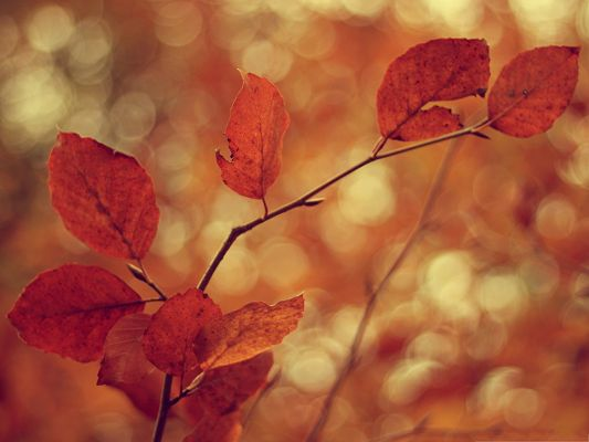 click to free download the wallpaper--Wallpaper for Computer Desktops, Leaves Bokeh, Typical Autumn Scene