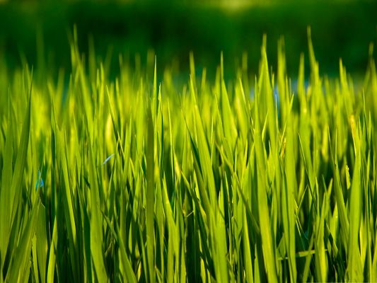 click to free download the wallpaper--Wallpaper for Computer Desktops, Summer Grass Under Macro Focus, Incredible Scene