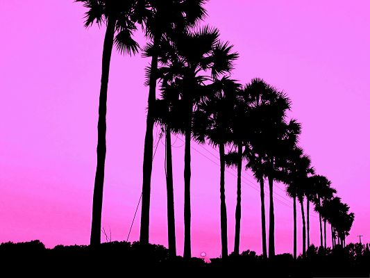 click to free download the wallpaper--Wallpaper for Desktop Computer, Cute Trees Standing Tall, Under the Pink Sky