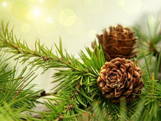 click to free download the wallpaper--Wallpaper for Widescreen, Blooming Pine Cones, Nice Look