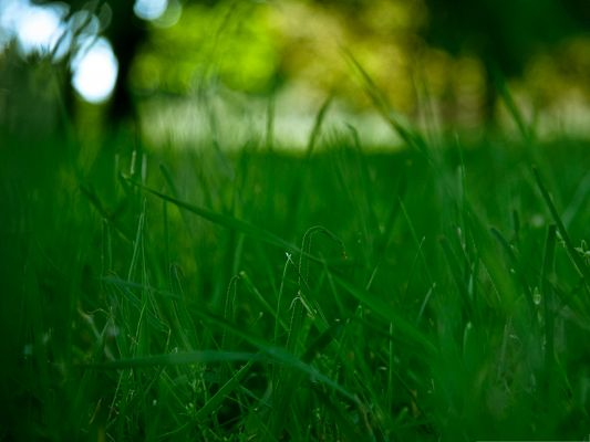 Wallpaper for Widescreen, Grass Meadow Being Focused, Clean and Fresh World