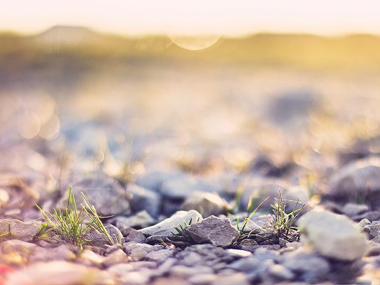 click to free download the wallpaper--Wallpaper for Widescreen, Pebbles Under Macro Focus, Amazing Landscape