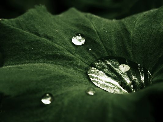 click to free download the wallpaper--Wallpaper for Widescreen, Water Drops on Leaf, Clear and Impressive