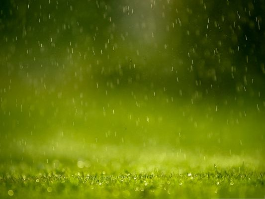 click to free download the wallpaper--Wallpaper for the Computer, Heavy Rain Falling on Green Grass, the Wonderful Nature!
