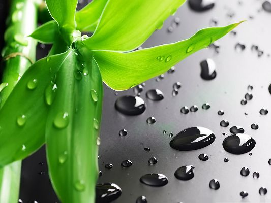click to free download the wallpaper--Wallpapers and Backgrounds, Bamboo Leaves with Waterdrops, Clean and Fresh Scene