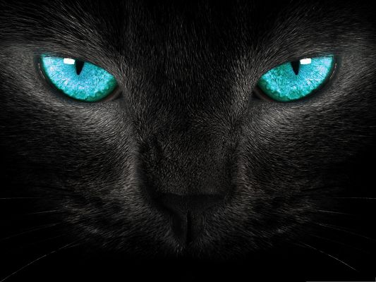 Wallpapers and Backgrounds, Black Kitty with Wide Open Blue Eyes