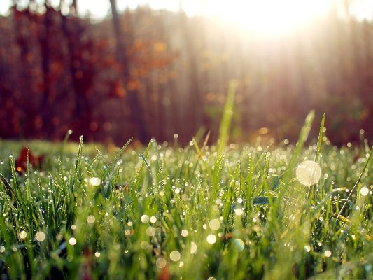click to free download the wallpaper--Wallpapers and Backgrounds Download, Green Grass Dew Bokeh, Pouring Sunlight