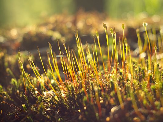 click to free download the wallpaper--Wallpapers and Backgrounds Download, Moss in the Morning, Sunshine All Over the Top