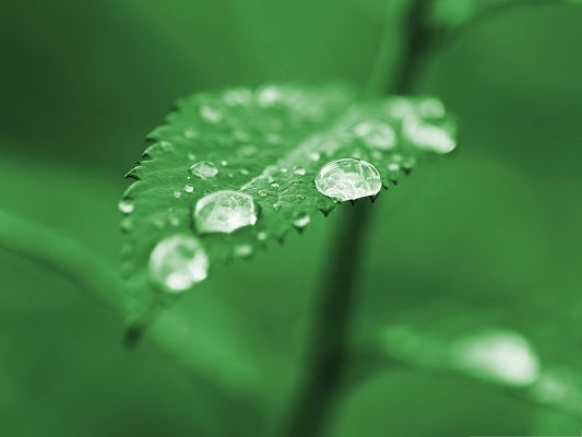 Wallpapers and Backgrounds Download, Rain Drops on Green Leaf, Feel Fresh and Clean