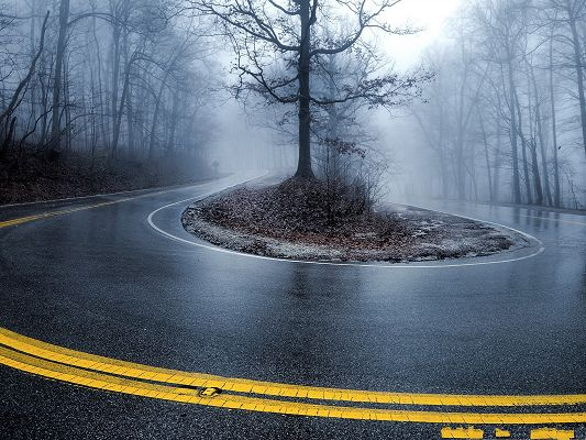 click to free download the wallpaper--Wallpapers and Backgrounds, Foggy Road, Tall Black Trees Alongside