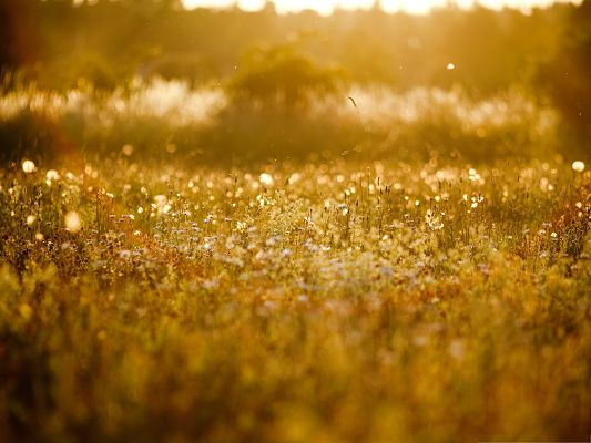 click to free download the wallpaper--Wallpapers and Backgrounds, Golden Meadow, Sunlight is Everywhere