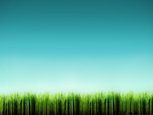 click to free download the wallpaper--Wallpapers and Backgrounds, Green Grass Blade, the Blue Sky Above