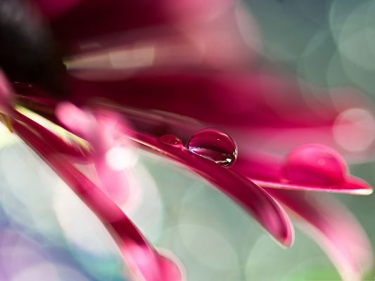 click to free download the wallpaper--Wallpapers and Backgrounds, Water Drop On Pink Petal, Amazing in Look