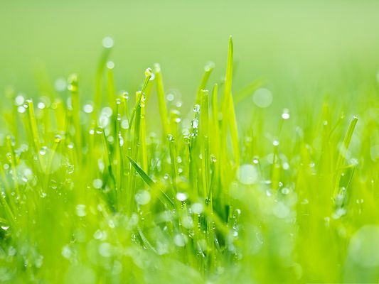 click to free download the wallpaper--Wallpapers for Computer Free, Green Grass Bokeh, Rain Drops on Top