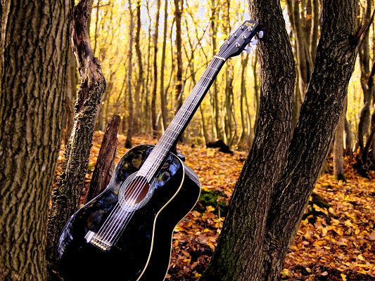 click to free download the wallpaper--Wallpapers for Computer Free, Guitar in Forest, Nice Musical Instrument